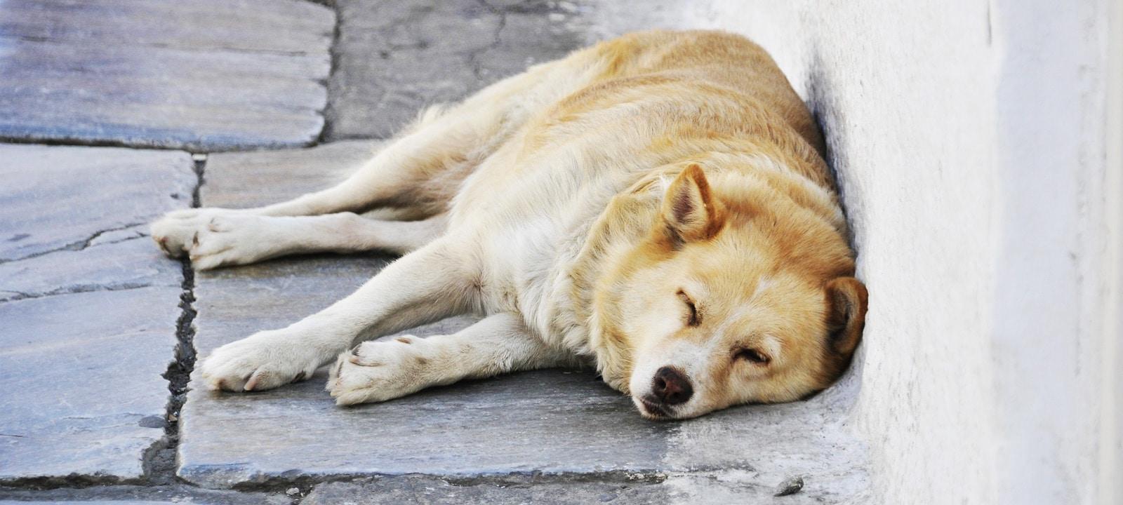 De 13 leukste slapende honden