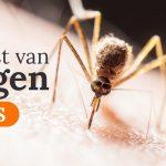 Effectieve tips tegen muggen op de slaapkamer